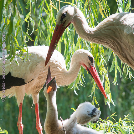 Spring, season of the baby storks, is a particularly interesting time to visit the park.