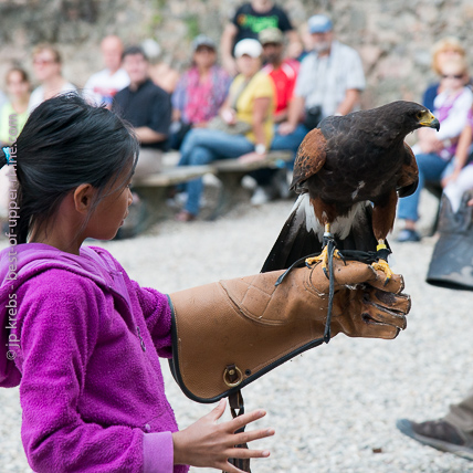 Children under the watchful eye of the falconer, are invited to an unforgettable moment!